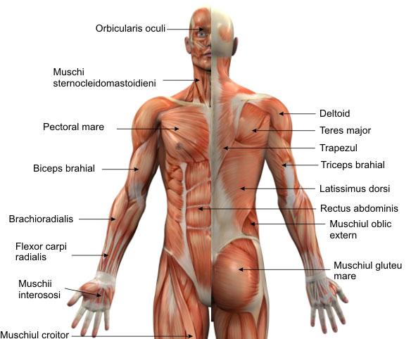 gel pentru articulații și coloana vertebrală și mușchi)
