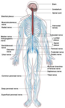polineuropatie a durerilor articulare pastile pentru boala piciorului și articulațiilor