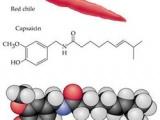 Capsaicina si terapia cu resiniferatoxina pentru spasticitatea vezicii urinare